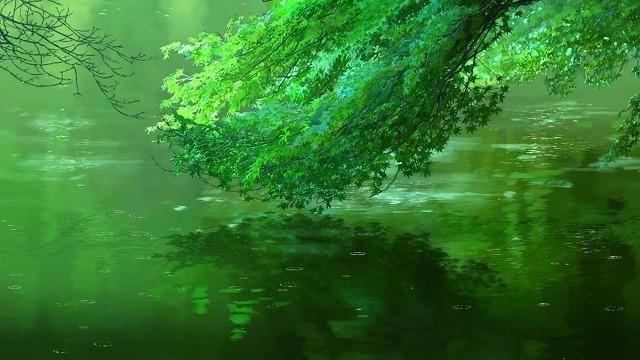 池に映る枝葉