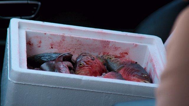 ダイナスティ-脅しの魚の頭たっぷり