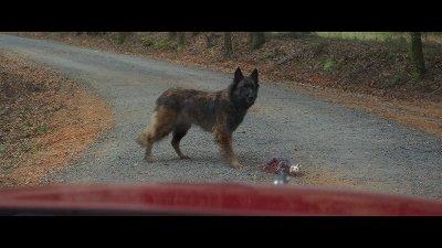 ジェラルドのゲーム-野良犬